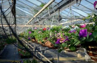 Cranleigh in Bloom