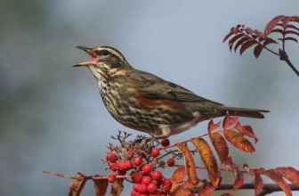 Crane Spotter – October 2019 – Autumn's rusty tones arrive