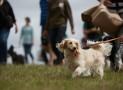 The Great Dog Walk 2019