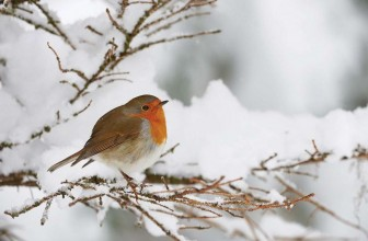 December – Looking after the Garden and Wildlife