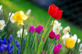 March – Spring Is Here At Last!