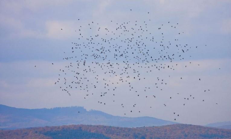 Crane Spotter – July 2018 – Meet the Flockers