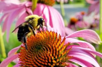July Gardening Tips – Looking good!