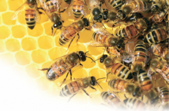 Keeping Bees Alive: Surrey Beekeepers' Association – Guildford Division