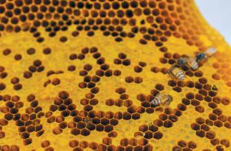 Bee Alive: Keep Britain's Bee Population Buzzing!