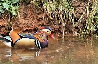 Crane Spotter – April 2020 – Amazing Mandarins