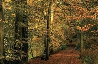 Fall for Cranleigh