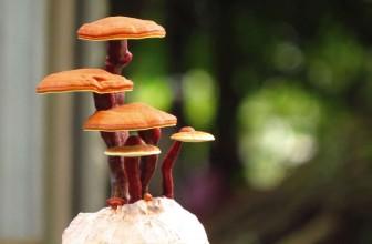 Did Someone Mention 'Magic' Mushrooms?