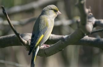 Crane Spotter: tales from a Cranleigh birder