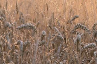 Harvest Cranleigh