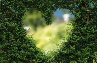 February 2019 – The Heart Of Our Gardens