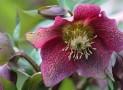 Ewhurst Horticultural  Society – Plant Sale