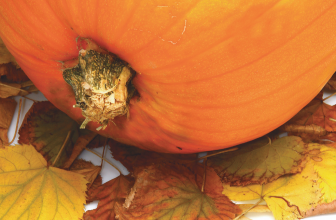 The Good Stuff: The Many Nutrient Benefits of Pumpkins