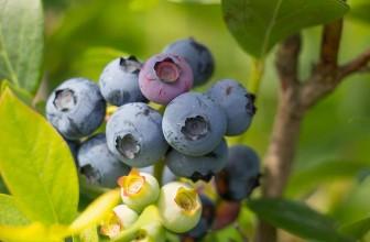 August – Juicy Fruits!