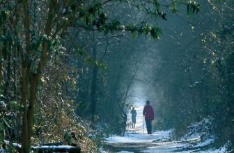 A Winter Walk in Cranleigh